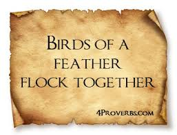 FLOCK Quotes Like Success     Birds of Feather Flock Together