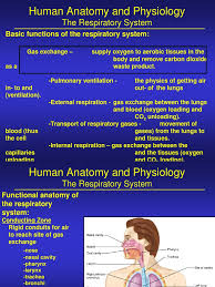 Anatomy And Physiology Of Lungs Human Anatomy And Physiology Lung Respiratory System