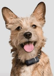 amazon black friday dog shock gps keep your dog safe and fit with these smart collars