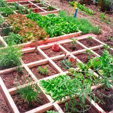 vegetable gardens blooming garden home maintenance llc