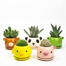 Succulents Pots For Sale by Juicy Pets Diy Animal Pots For Succulents Juicykits Com