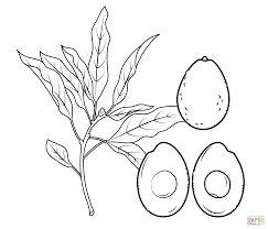 avocado coloring page free printable coloring pages