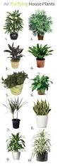low light indoor plants that are easy to grow best houseplants