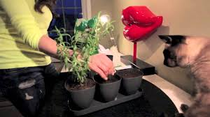diy indoor herb garden for 10 easy and pretty youtube