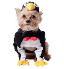 Dog Costumes Halloween 25 Small Dog Halloween Costumes Ideas