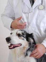veterinarians-mesa-az
