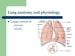 Anatomy And Physiology Of Lungs Respiratory Function Tests Ppt Video Online Download