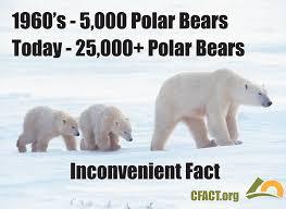 Global warming  polar bears eat dolphins   GrindTV com