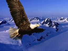 اجمل صور الطبيعة images?q=tbn:ANd9GcSY1kr-sSdKPaw6nr4iVSSJf9DidCo8rMpwc-8XqyMPENM_Snvv
