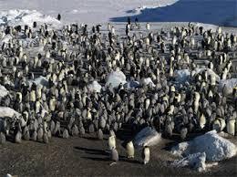 Tour de l'Antarctique à l'envers (LS) Images?q=tbn:ANd9GcSY7c8a64hNd1bwrqZq0_LSDXnMyQRe_32sWDWfTmfZNWJK1x3xkgVykHHs