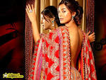 Indian Celebrities Wallpaper: Amrita Rao Wallpapers