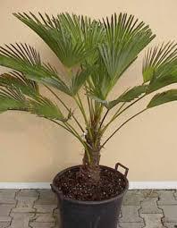 نباتات للتزيين الشرفة images?q=tbn:ANd9GcS