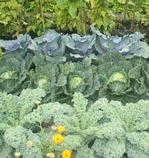 companion vegetable garden layout companion planting west coast seeds