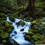 Forest Stream HD desktop wallpaper : High Definition : Fullscreen ...