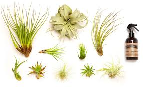 Office Desk Plants by Amazon Com Hinterland Trading Air Plant Collector U0027s Edition Set