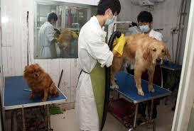 pet boarding services