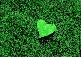 Volim zeleno - Page 3 Images?q=tbn:ANd9GcSaRofKD7FQBzzVj4RTGJdCYEdUvEW49rYAu9MLtTaa3zvKFC-A