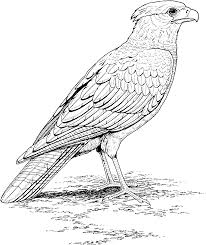 eagle realistic animal coloring pages eagle coloring pages