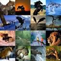 طريقة تربية الحيوان صور الحيوانات معلومات عن الحيوان قطط كلاب وكل ما يتعلق بالحيوانات