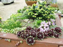 Small Rock Garden Pictures by Gardenless Gardener Rock Garden Ideas