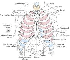 Anatomy And Physiology Of Lungs Cardiovascular And Pulmonary Anatomy Clinical Gate