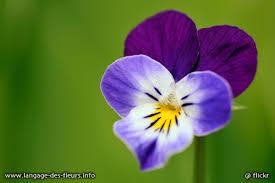 rêve 2..la violette Images?q=tbn:ANd9GcSbyGMfD9qF28UCeI7WYmX8vUoQLDV8hMVLrkzi55JdSB30YMLP-Q