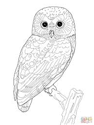tadpole coloring page snowy owl coloring pages owls coloring pages free coloring pages