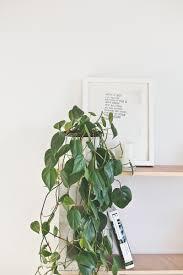 indoor plant guide blackbird