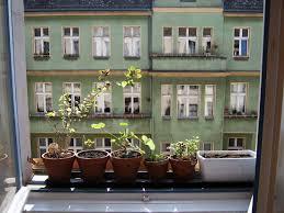 window herb garden plants indoor window herb garden today i