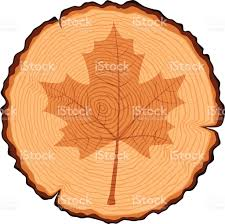 Maple Tree Symbolism by Wooden Cross Section And Maple Leaf Stock Vector Art 487611939