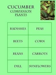 companion planting guide by my square foot gardent this guide is