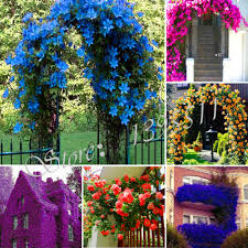 online buy wholesale climbing flowering plants from china climbing