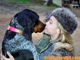 training a bluetick coonhound to hunt why bluetick hounds for championship coon dogs john in the
