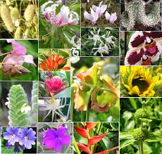 Flowers Plants by Plant Divisions Flowering Plants Tentative Plant Scientist