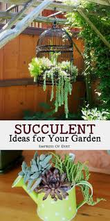 garden rockery ideas best 25 succulent garden ideas ideas on pinterest succulents