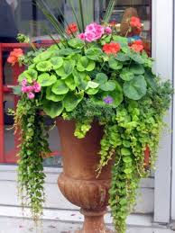 best 25 urn planters ideas on pinterest urn garden pots ideas