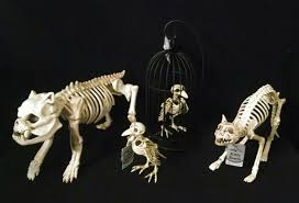Halloween Skeleton Props by Halloween Skeleton Cat Page 2 Bootsforcheaper Com