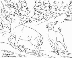 forest animals coloring pages coloring pages pinterest