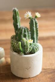 articles with large cactus planters tag cactus garden pot design