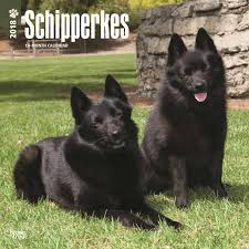 belgian shepherd uk breeders schipperkes calendar 2018 calendar club uk