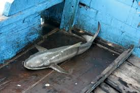 hải sản TÔM CUA GHẸ CÁ KHÔ giá TỐT NHẤT,RẺ NHẤT Vũng Tàu đây - 2