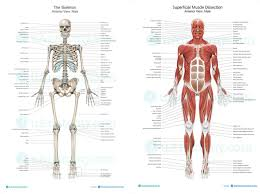 Anatomy And Physiology Chapter 1 Review Answers Welcome To Ms Stephens U0027 Anatomy And Physiology And Environmental