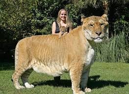 Comparação de  tamanho entre  animais  e   Seres humanos - Página 2 Images?q=tbn:ANd9GcSkF5Z7B5IX31YuFvC1x9DMUBdN6vHnIx6ZCreiMzBWJSfgtXsI