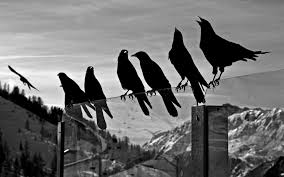 Wallpaper Black And White by Black And White Bird Wallpapers 39 Wallpapers U2013 Adorable Wallpapers