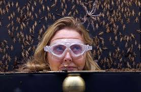 Carol Vorderman doesn     t let the critters bug her as I     m A     Mirror