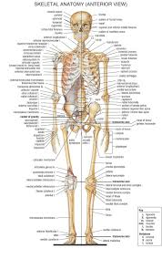 Structure Of Human Anatomy Human Anatomy Inside Periodic Tables