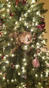 Simons Cat Christmas Tree by You Laugh You Lose Thread No Videos Read Op
