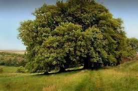 [Super Xịn] Bạn thuộc loại cây gì và bạn là người thế nào? Images?q=tbn:ANd9GcSljHcXIHsXk84NTAmZPx68klQiXeV7_HqhFukc-_5q2e2dy8UJ