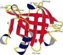 de β-<b>lactoglobuline</b>.