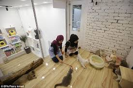 Malaysia five star cat hotel with a spa and dating service   Daily     Daily Mail Staff play with cats inside the Very Very Important Cat  VVIC  room  which